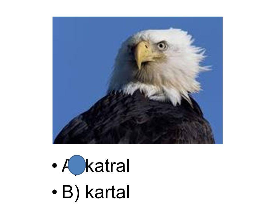 A) katral B) kartal