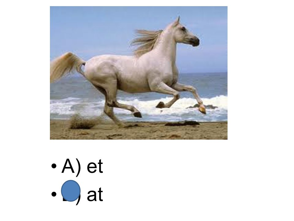 A) elat B) alet