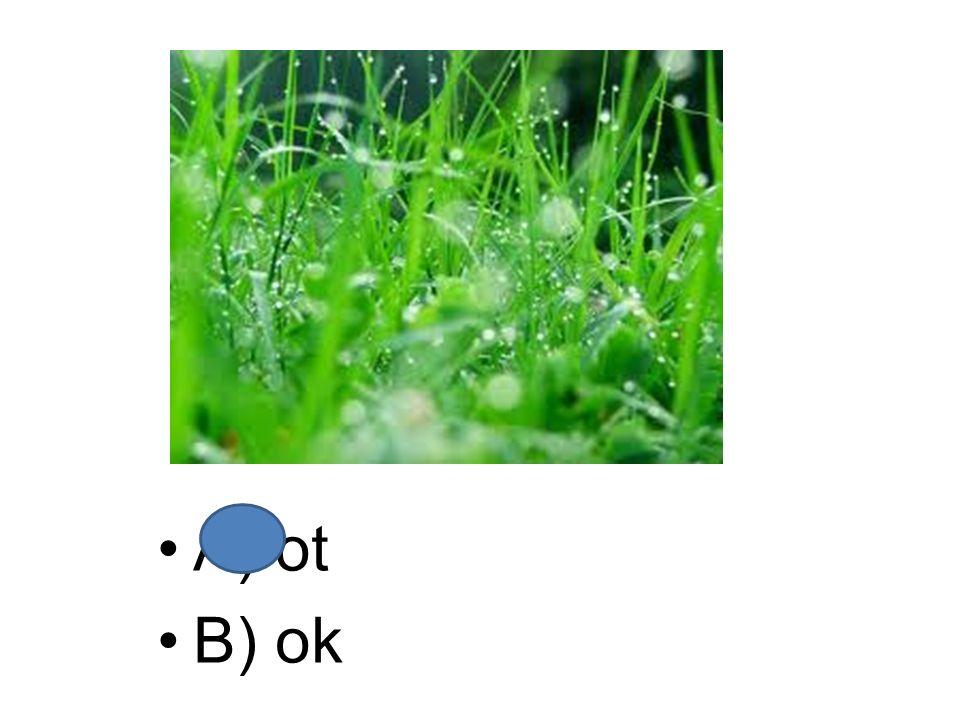 A) ot B) ok