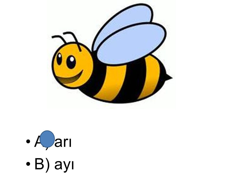 A) arı B) ayı
