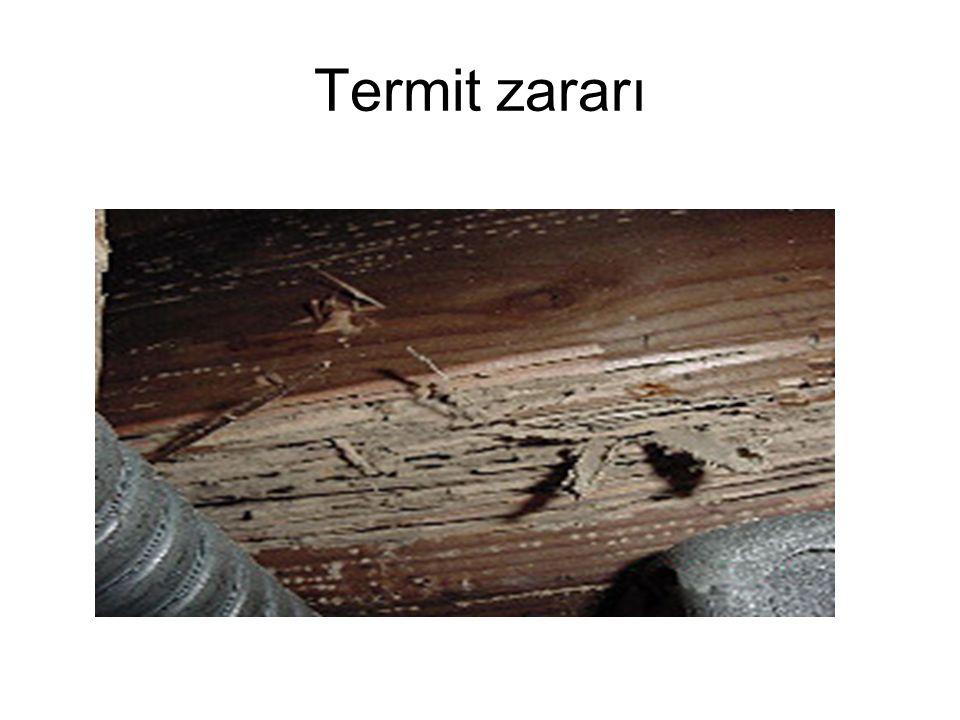 Termit zararı
