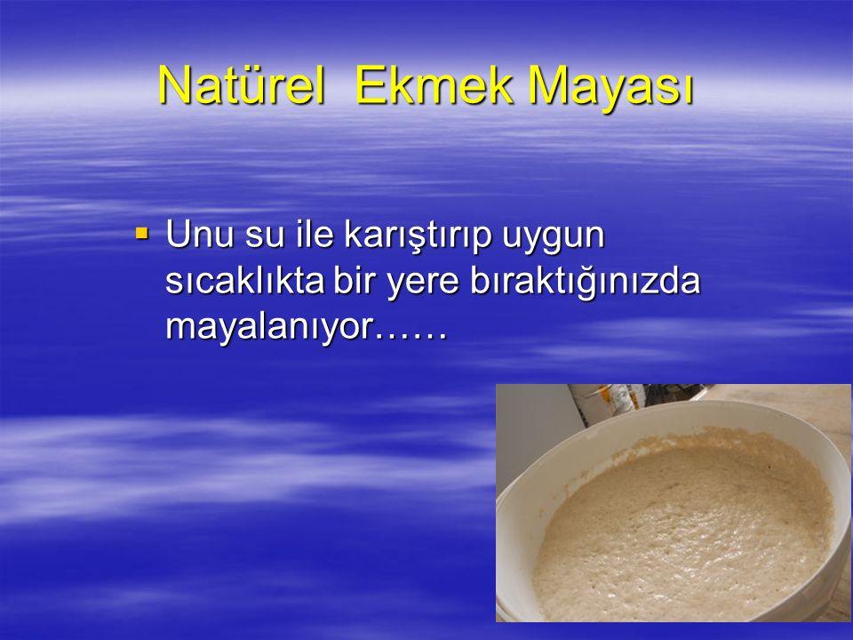 Natürel Ekmek Mayası  Unu su ile karıştırıp uygun sıcaklıkta bir yere bıraktığınızda mayalanıyor……