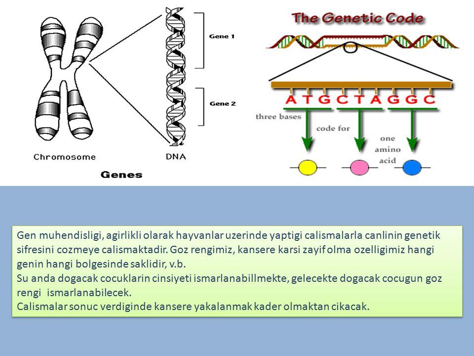 Gen muhendisligi, agirlikli olarak hayvanlar uzerinde yaptigi calismalarla canlinin genetik sifresini cozmeye calismaktadir.