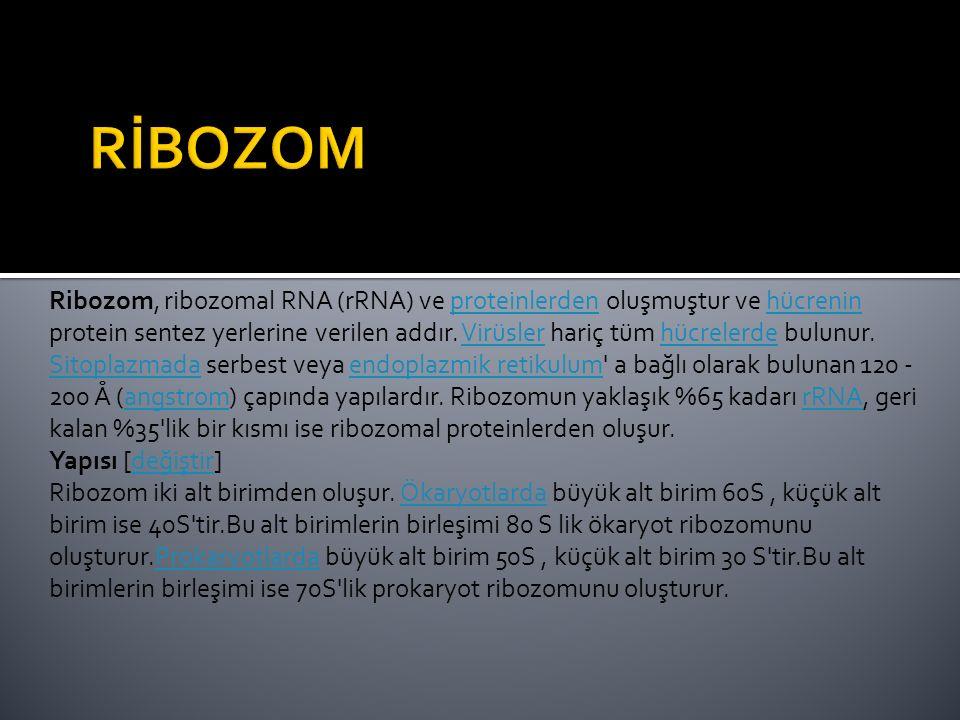 Ribozom, ribozomal RNA (rRNA) ve proteinlerden oluşmuştur ve hücrenin protein sentez yerlerine verilen addır.