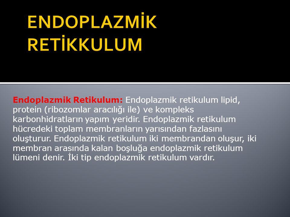 Endoplazmik Retikulum: Endoplazmik retikulum lipid, protein (ribozomlar aracılığı ile) ve kompleks karbonhidratların yapım yeridir.