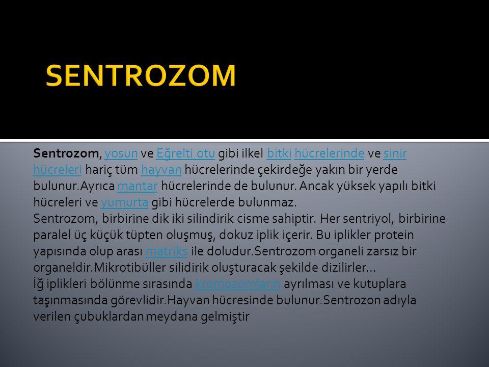 Sentrozom, yosun ve Eğrelti otu gibi ilkel bitki hücrelerinde ve sinir hücreleri hariç tüm hayvan hücrelerinde çekirdeğe yakın bir yerde bulunur.Ayrıc