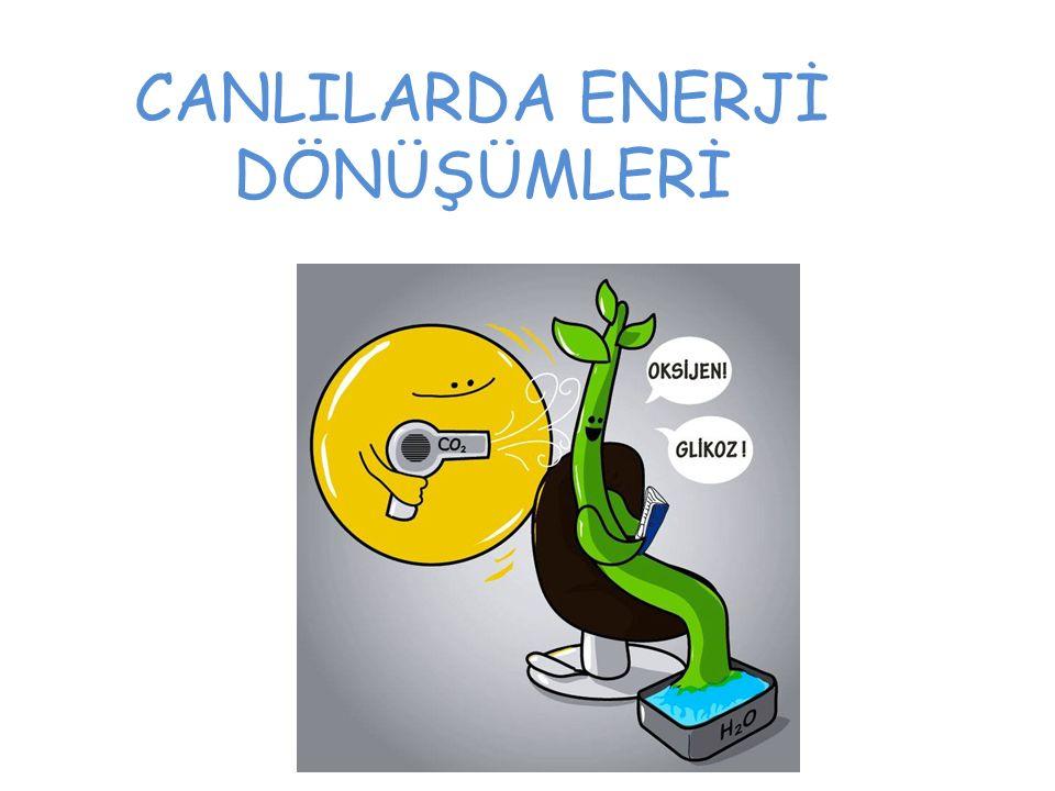 Enerji nedir.Neden canlıların enerjiye ihtiyacı vardır.