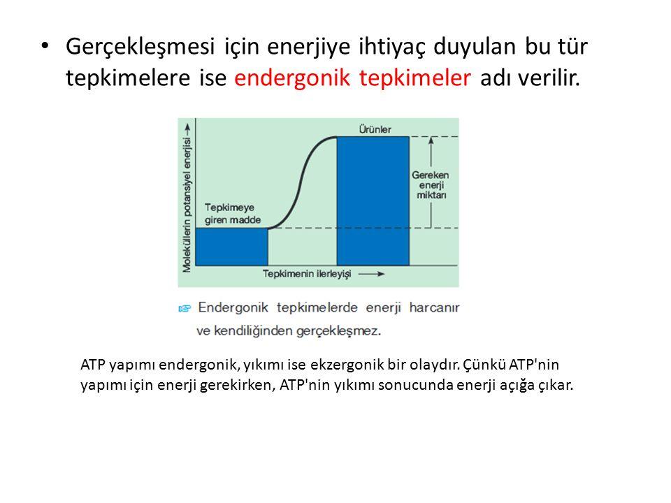 Gerçekleşebilmesi için enerjiye ihtiyaç duyulan (endergonik) olaylar sırasında defosforilasyon görülür.