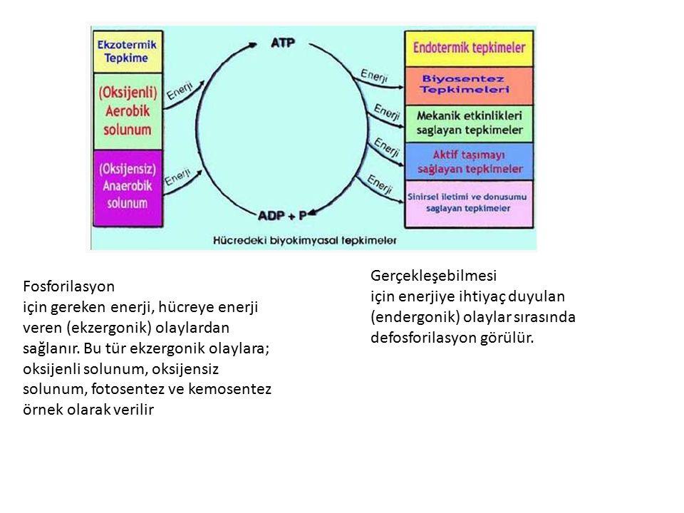 METABOLİZMA Hücrede gerçekleşen yapım ve yıkım reaksiyonlarının tamamına metabolizma adı verilir.