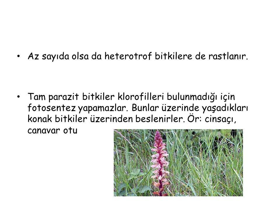 FOTOSENTEZİN BULUNUŞU 1772 yılında Joseph Priestley; bitkilerin havaya O 2 verirken havadaki CO 2 yi kullandığını, yani bitkilerin havayı temizlediğini gözlemlemiştir.