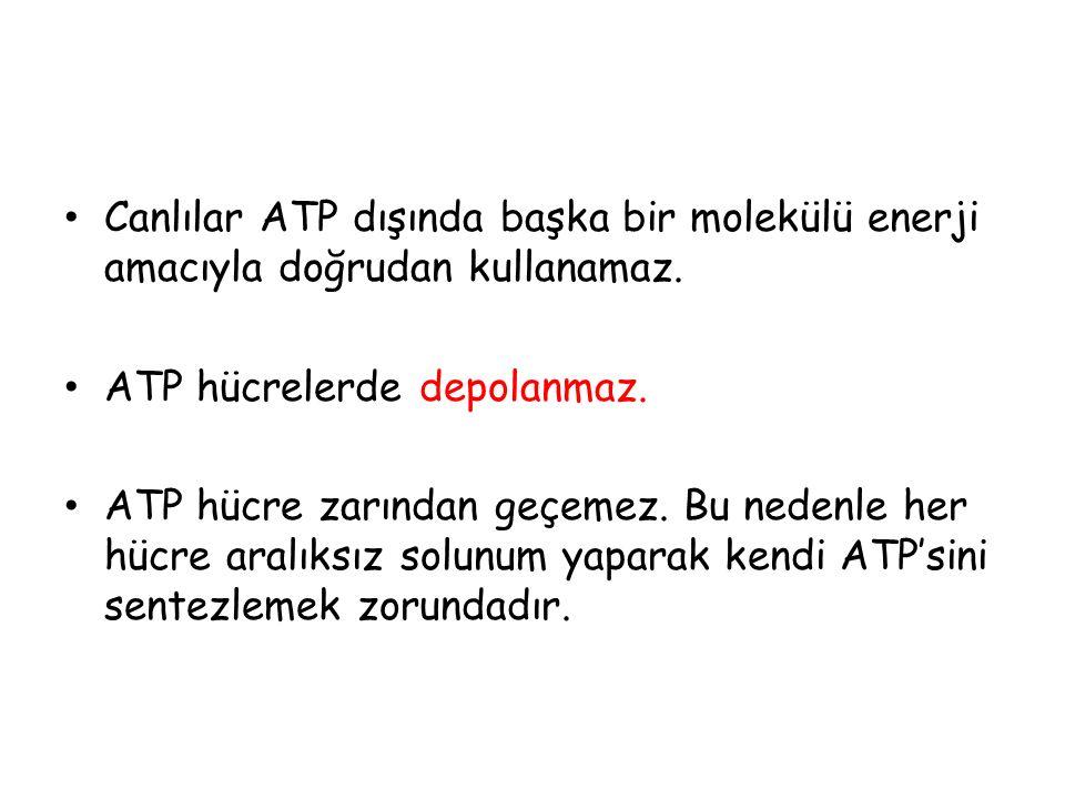 ATP molekülün kullanıldığı olaylar: →Kasların kasılması →Aktif taşıma, endositoz ve ekzositoz olayları →Sinirsel iletim →Tüm sentez olayları →Hücre bölünmesi →Dehidrasyon sentezi →Aktivasyon enerjisi ÖNEMLİ NOT : Osmos, difüzyon ve sindirim (hidroliz) olayında ATP kullanılmaz.