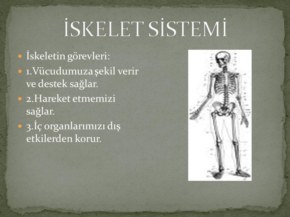 Omurga ve ğögüs kafesini oluşturan kemikler arasındaki eklemlerin hareketleri sınırlıdır. Kafatası kemikleri arasında da eklemler vardır. Ama bu eklem