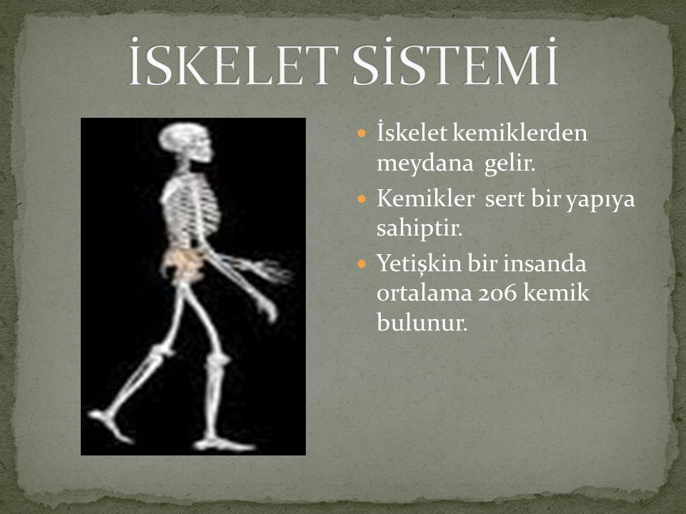 İskelet kemiklerden meydana gelir.Kemikler sert bir yapıya sahiptir.