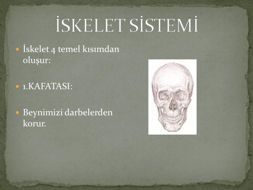 Kemikler şekillerine göre 3'e ayrılır: 1.Uzun kemikler : Kol ve bacak kemikleri 2.Kısa kemikler:El ve ayak bilekleri ile omurga kemikleri 3.Yassı kemi