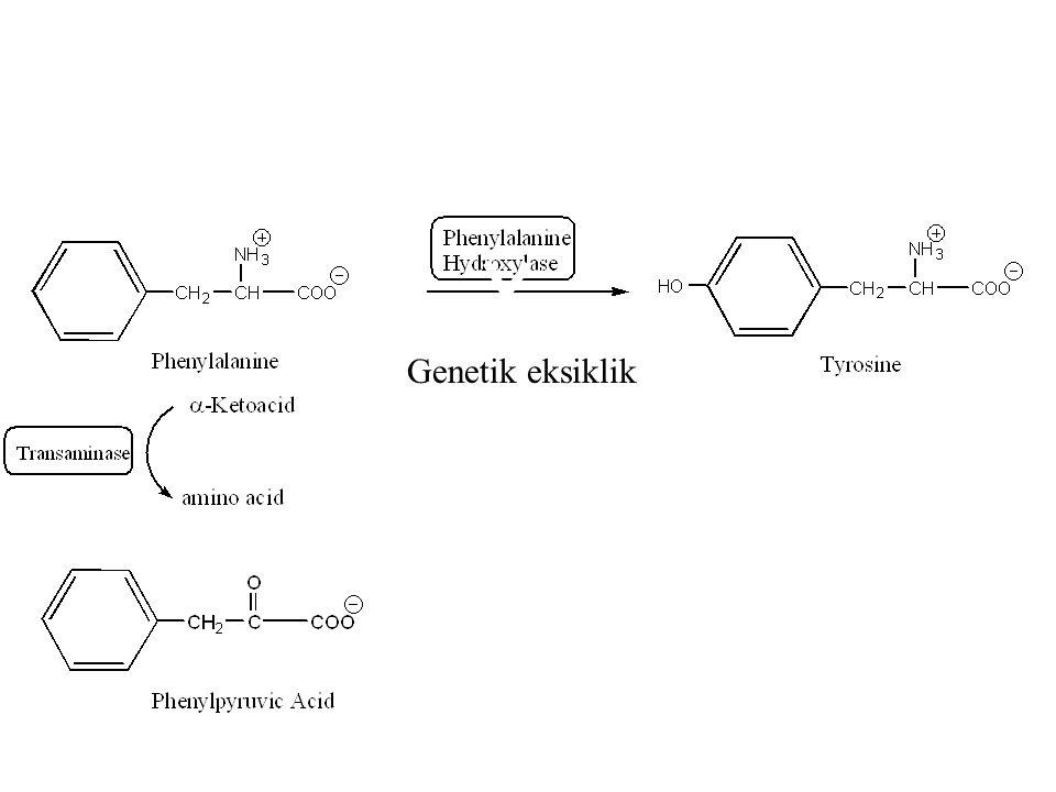 l Fenilalanin tirozine dönüşerek metabolize olamadığı için minör metabolik yollar aktive olur l Fenilalanin fenillaktat, fenilasetat ve fenilasetilglu