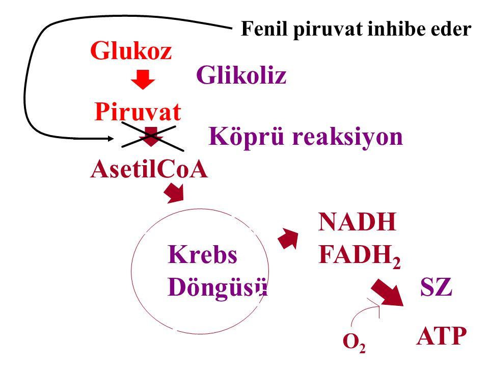 Fenilasetilglutamin Fenilpiruvat aslında daha çok fenillaktat ve fenilasetilglutamine dönüşerek metabolize olur