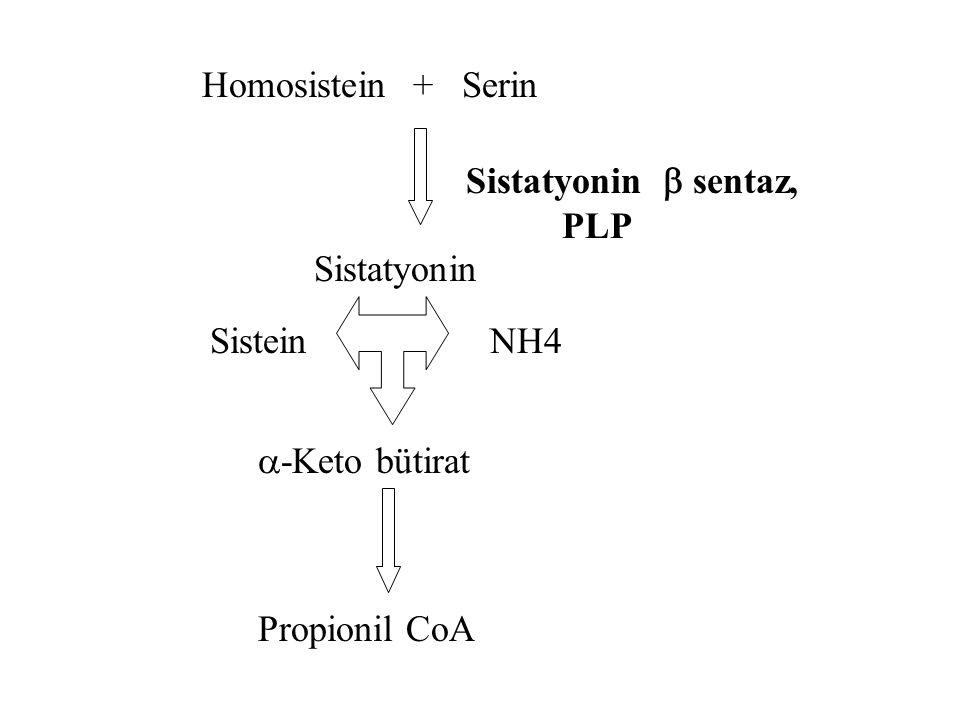 Homosistinüri l Homosistein sulu ortamda unstabildir ve homosistine dönüşür l Homosistein'in l 1-sistatyonin'e ve l 2-metiyonin'e dönüşümünü engelleye