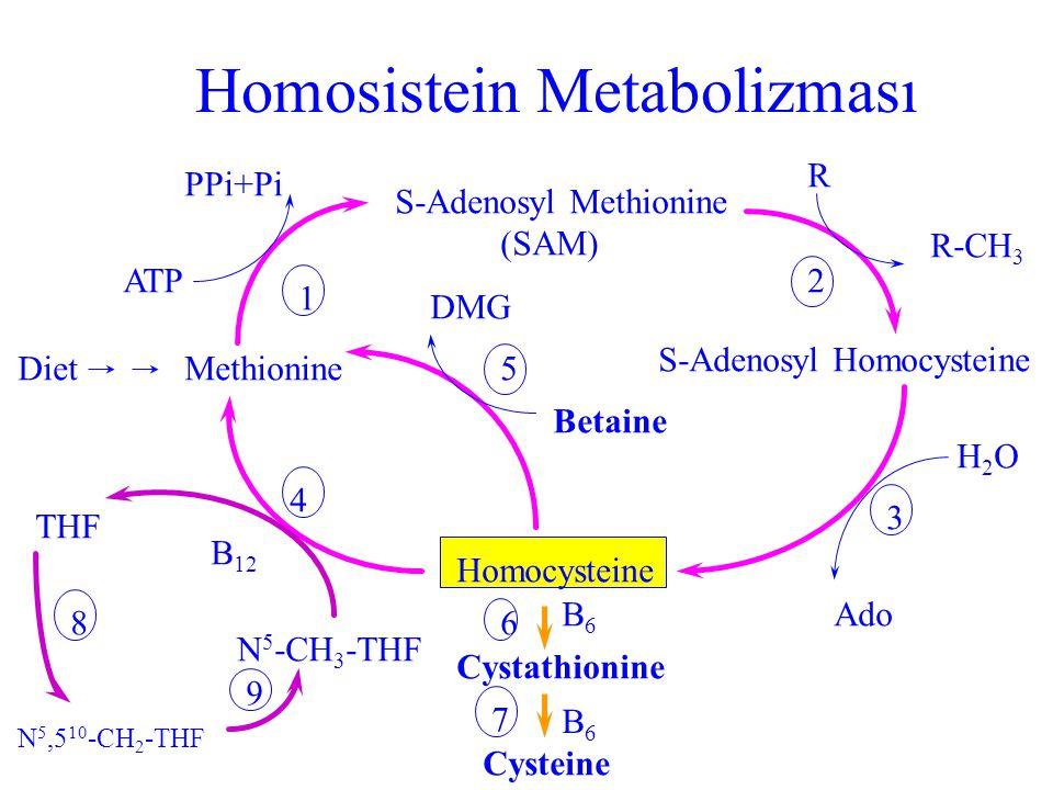 Sistatyonin  sentaz eksikliği (homosistinüri tip 1) l En sık (1/200 000) homosistinüri nedeni l Plazma metiyonin ve idrar homosistin artmış l Göz bul