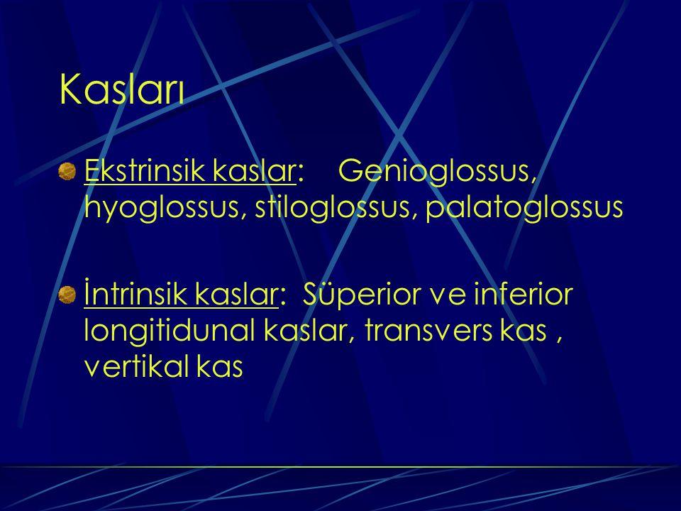 Kasları Ekstrinsik kaslar: Genioglossus, hyoglossus, stiloglossus, palatoglossus İntrinsik kaslar: Süperior ve inferior longitidunal kaslar, transvers