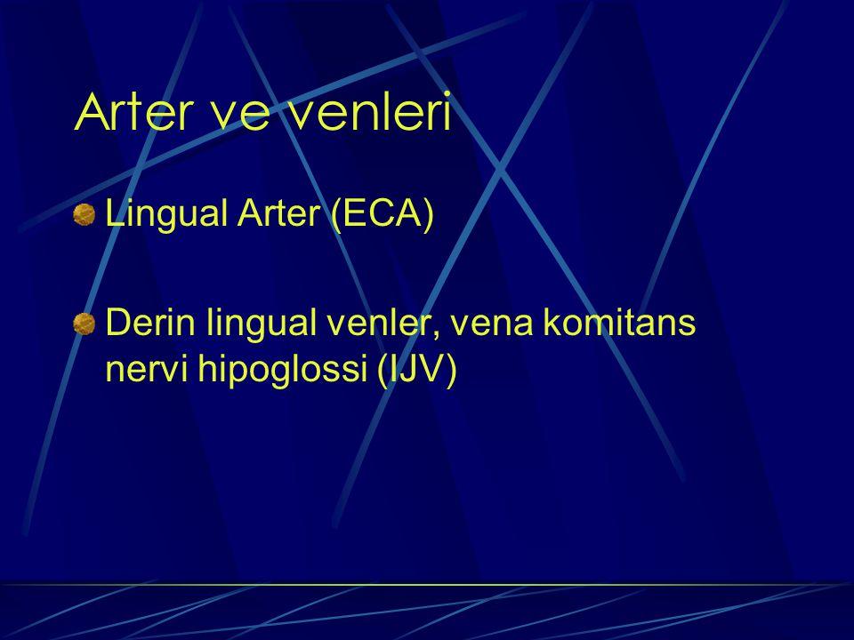 Arter ve venleri Lingual Arter (ECA) Derin lingual venler, vena komitans nervi hipoglossi (IJV)