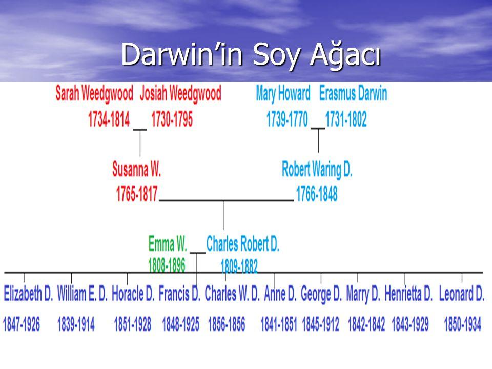 Darwin'in Soy Ağacı Darwin'in Soy Ağacı