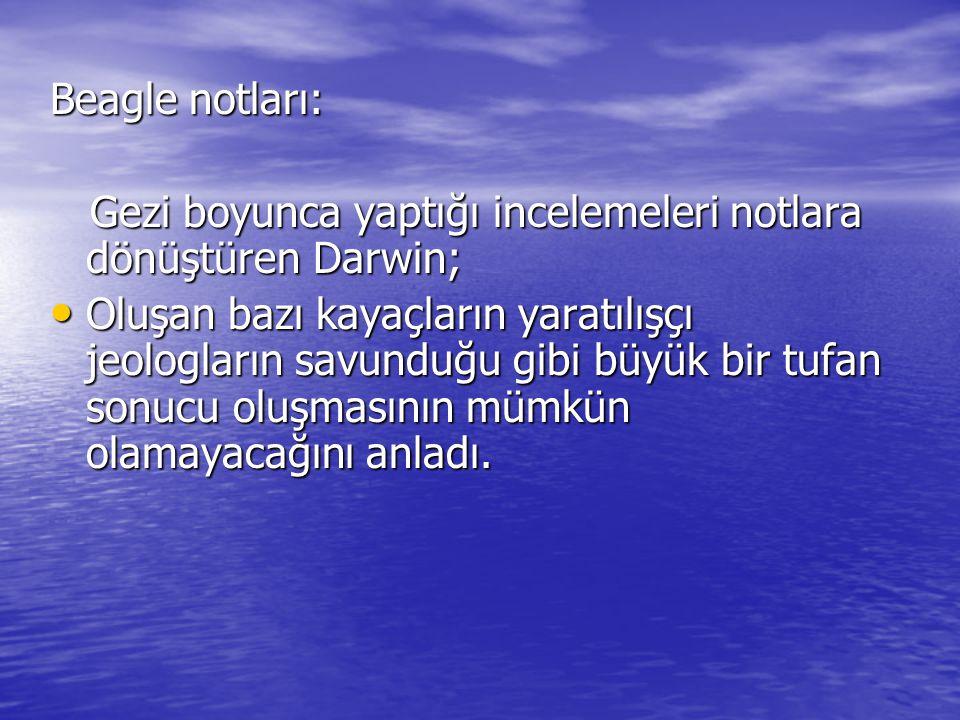 Beagle notları: Gezi boyunca yaptığı incelemeleri notlara dönüştüren Darwin; Gezi boyunca yaptığı incelemeleri notlara dönüştüren Darwin; Oluşan bazı kayaçların yaratılışçı jeologların savunduğu gibi büyük bir tufan sonucu oluşmasının mümkün olamayacağını anladı.