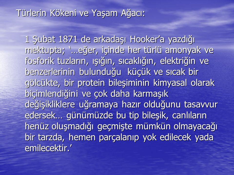 Türlerin Kökeni ve Yaşam Ağacı: 1 Şubat 1871 de arkadaşı Hooker'a yazdığı mektupta; '…eğer, içinde her türlü amonyak ve fosforik tuzların, ışığın, sıc