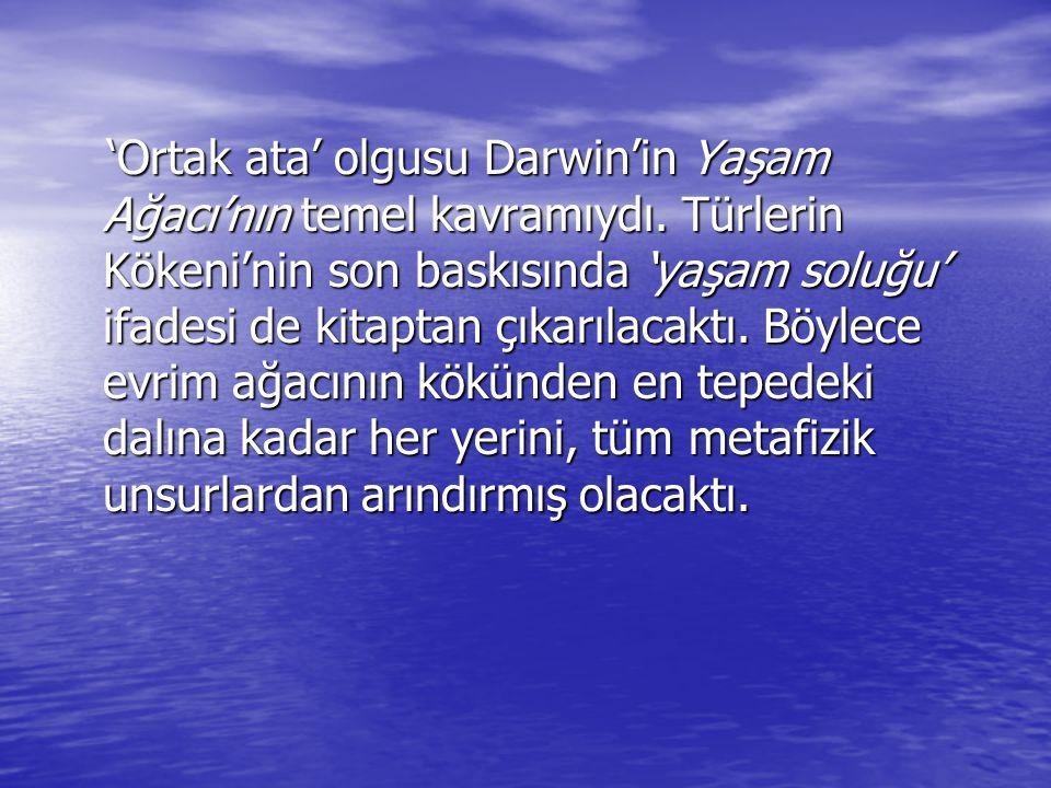 'Ortak ata' olgusu Darwin'in Yaşam Ağacı'nın temel kavramıydı. Türlerin Kökeni'nin son baskısında 'yaşam soluğu' ifadesi de kitaptan çıkarılacaktı. Bö