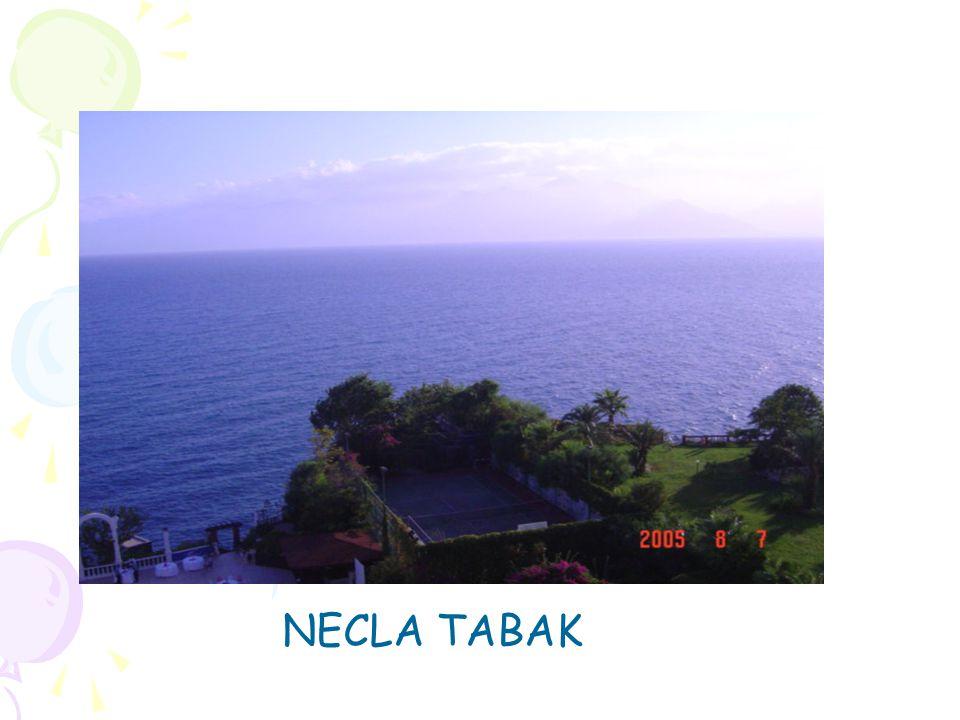NECLA TABAK