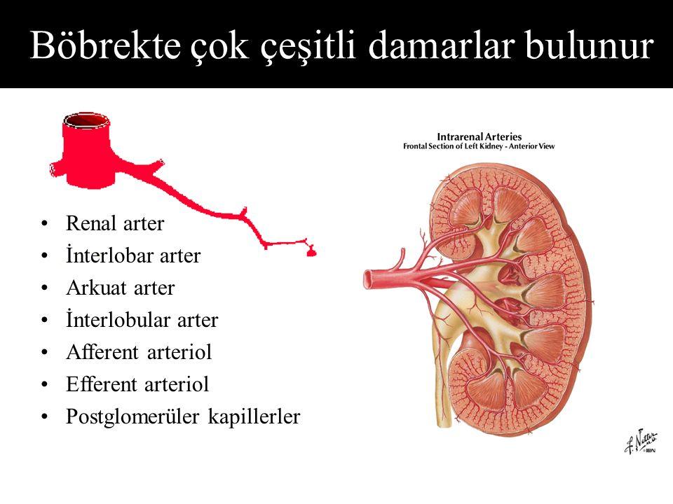 Böbrekte çok çeşitli damarlar bulunur Renal arter İnterlobar arter Arkuat arter İnterlobular arter Afferent arteriol Efferent arteriol Postglomerüler kapillerler
