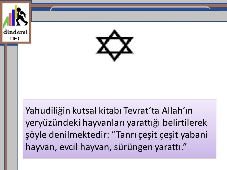 """Yahudiliğin kutsal kitabı Tevrat'ta Allah'ın yeryüzündeki hayvanları yarattığı belirtilerek şöyle denilmektedir: """"Tanrı çeşit çeşit yabani hayvan, evc"""