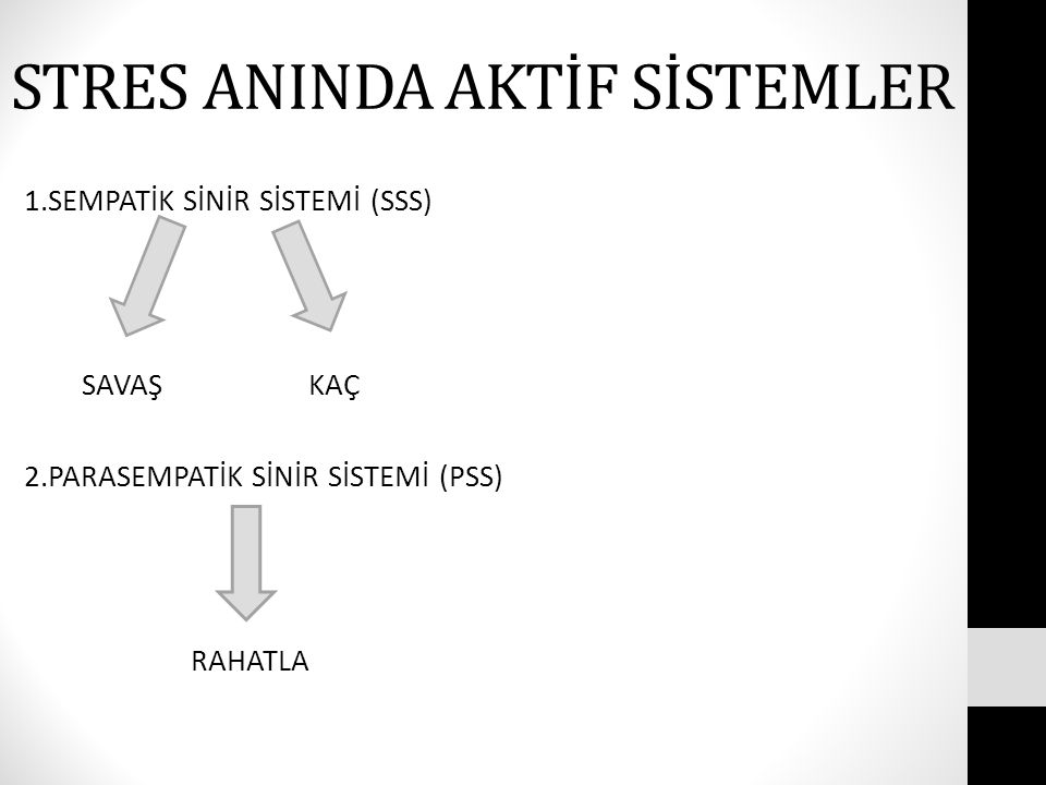 STRES'İN BEYİNDE Kİ ETKİLERİ ORGANİZMA STRES BEYİN???.