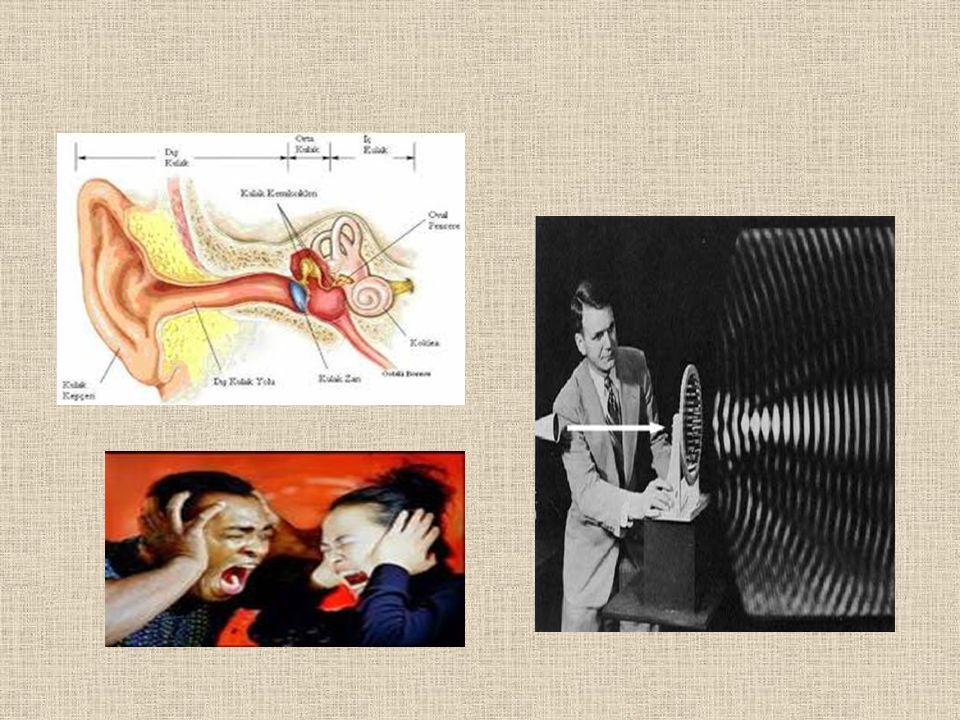 SES NASIL OLUŞUR Sesin nasıl oluştuğuna dair pek çoğumuzun bir bilgisi yoktur.