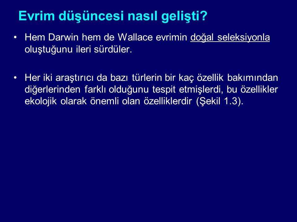 Evrim düşüncesi nasıl gelişti? Hem Darwin hem de Wallace evrimin doğal seleksiyonla oluştuğunu ileri sürdüler. Her iki araştırıcı da bazı türlerin bir
