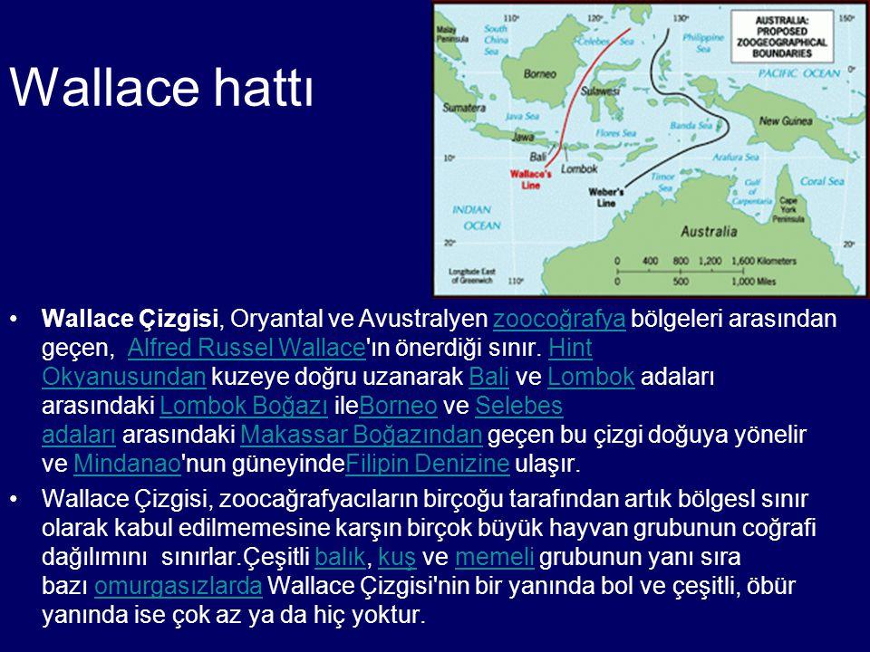 Wallace hattı Wallace Çizgisi, Oryantal ve Avustralyen zoocoğrafya bölgeleri arasından geçen, Alfred Russel Wallace'ın önerdiği sınır. Hint Okyanusund
