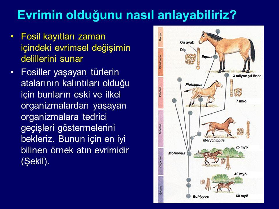 Evrimin olduğunu nasıl anlayabiliriz? Fosil kayıtları zaman içindeki evrimsel değişimin delillerini sunar Fosiller yaşayan türlerin atalarının kalıntı