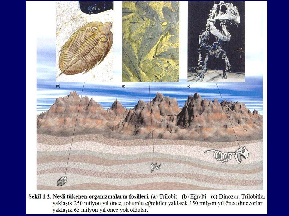 Doğal seleksiyonla evrim günümüzde de olmaktadır Doğal seleksiyon geçmişle sınırlı değildir.