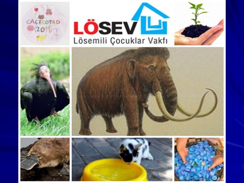 DERNEĞİMİZİN PROJELERİ: CAÇEKOTAD'ı Tanıtma.LÖSEV' e bağış kampanyası.