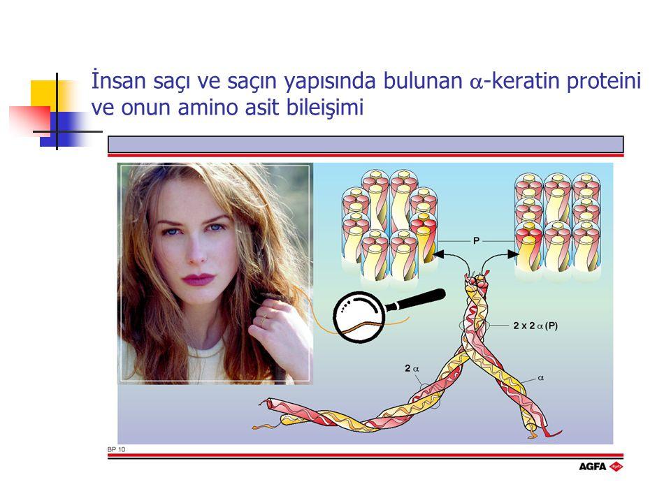 İnsan saçı ve saçın yapısında bulunan  -keratin proteini ve onun amino asit bileişimi