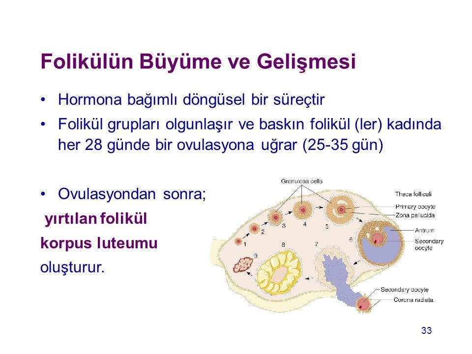 Folikülün Büyüme ve Gelişmesi Hormona bağımlı döngüsel bir süreçtir Folikül grupları olgunlaşır ve baskın folikül (ler) kadında her 28 günde bir ovula