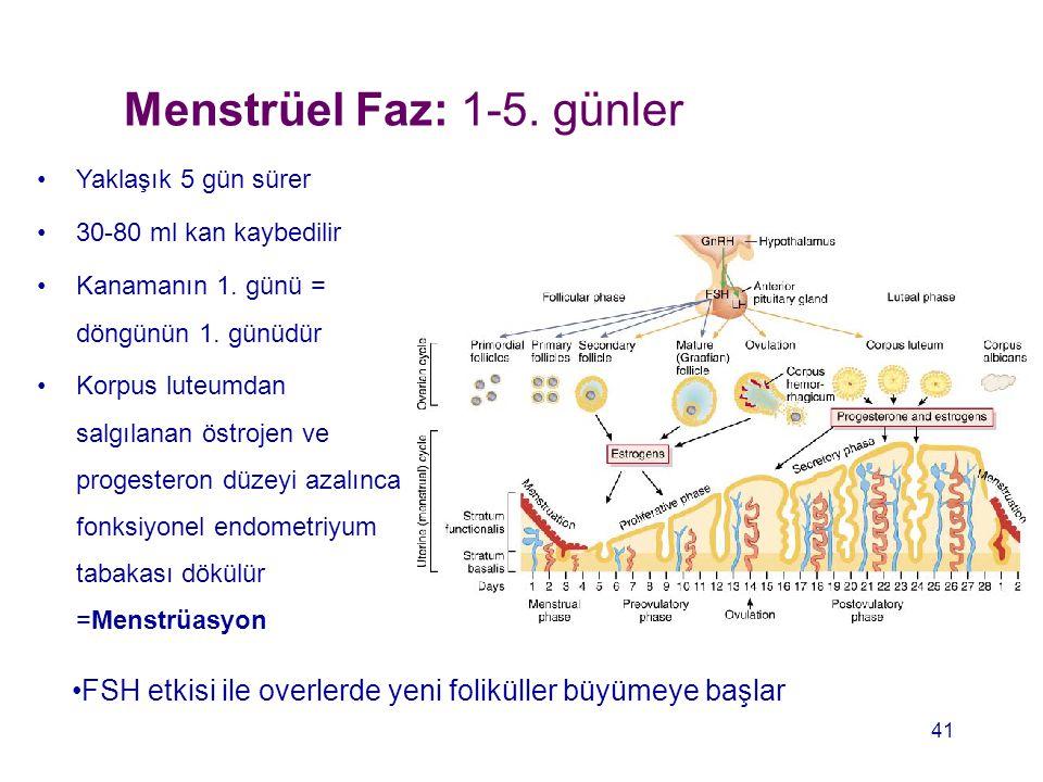 Menstrüel Faz: 1-5. günler Yaklaşık 5 gün sürer 30-80 ml kan kaybedilir Kanamanın 1. günü = döngünün 1. günüdür Korpus luteumdan salgılanan östrojen v