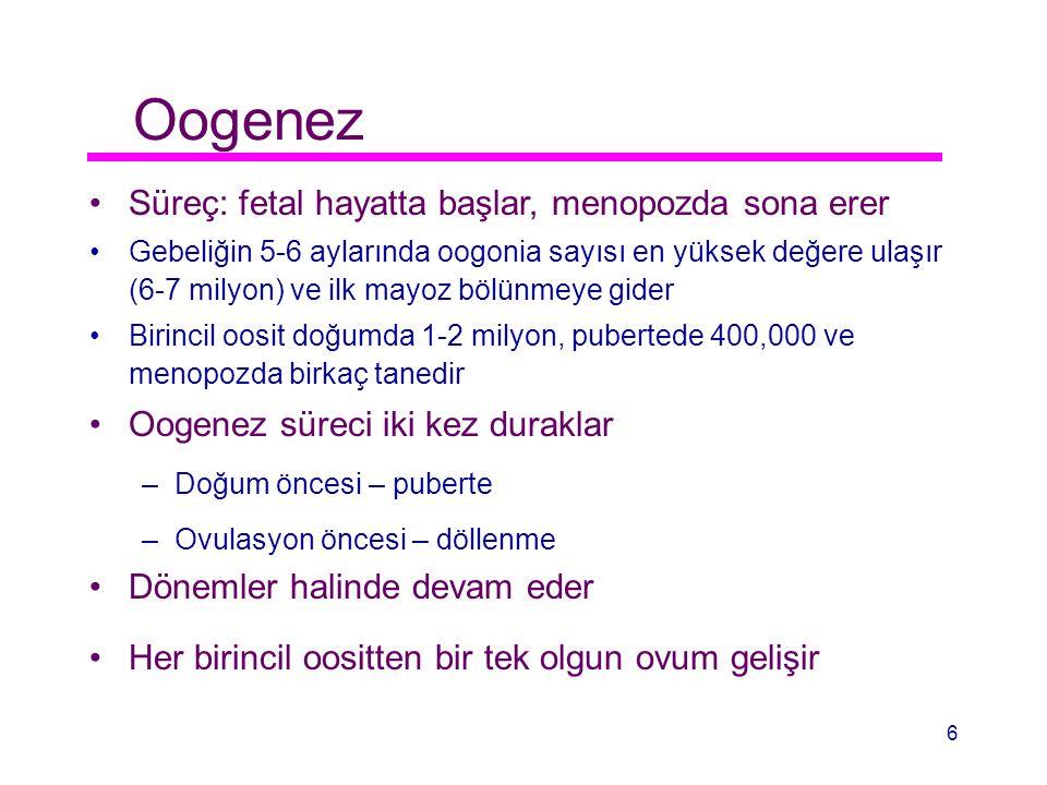 Oogenez Süreç: fetal hayatta başlar, menopozda sona erer Gebeliğin 5-6 aylarında oogonia sayısı en yüksek değere ulaşır (6-7 milyon) ve ilk mayoz bölü