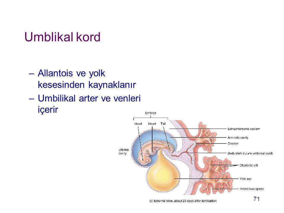 Umblikal kord –Allantois ve yolk kesesinden kaynaklanır –Umbilikal arter ve venleri içerir 71