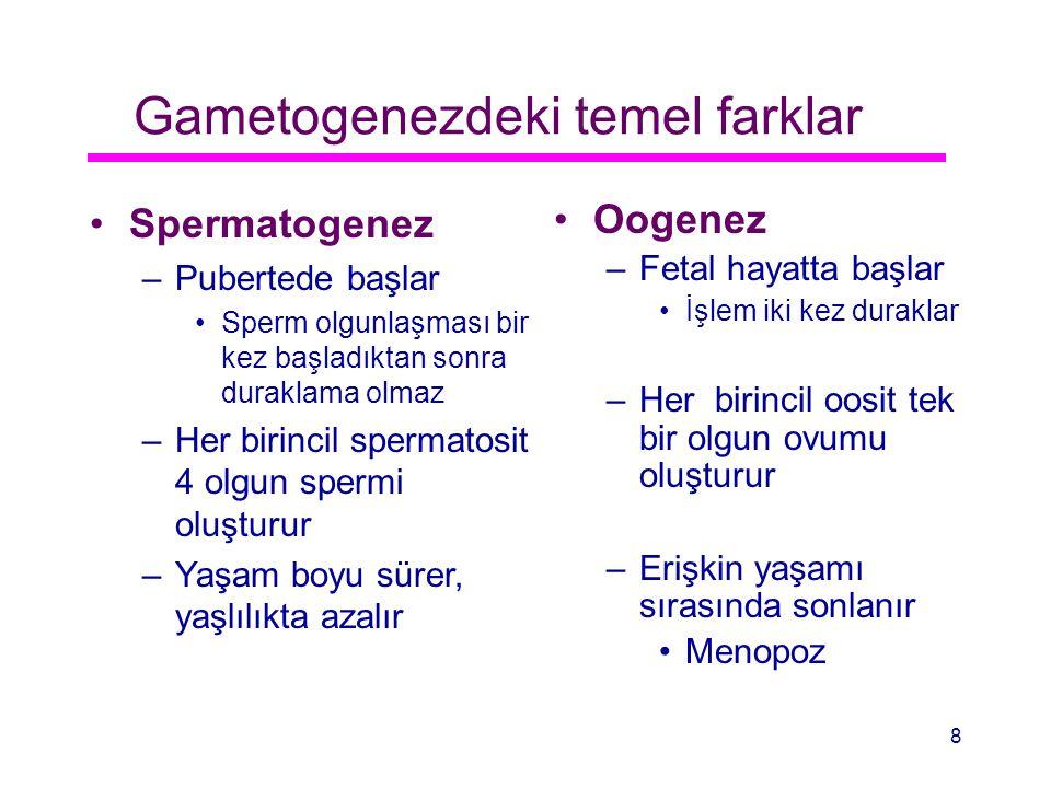 Gametogenezdeki temel farklar Spermatogenez –Pubertede başlar Sperm olgunlaşması bir kez başladıktan sonra duraklama olmaz –Her birincil spermatosit 4