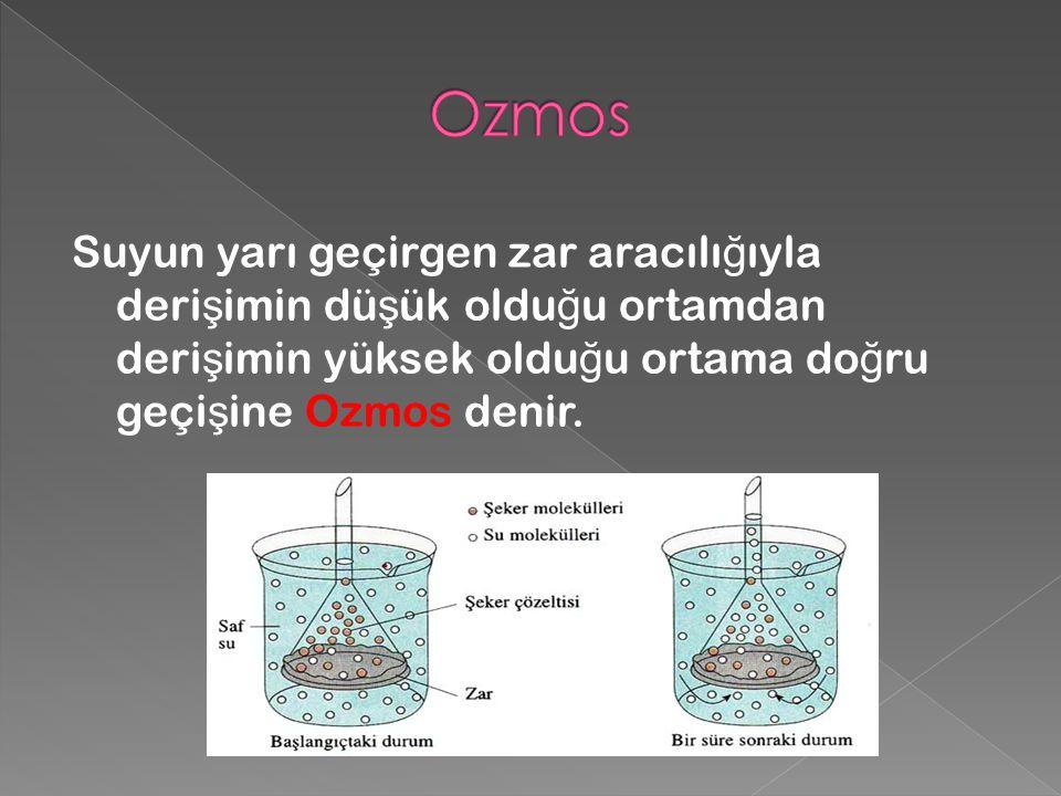 Suyun yarı geçirgen zar aracılı ğ ıyla deri ş imin dü ş ük oldu ğ u ortamdan deri ş imin yüksek oldu ğ u ortama do ğ ru geçi ş ine Ozmos denir.