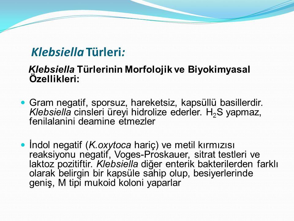 Klebsiella Türleri: Klebsiella Türlerinin Morfolojik ve Biyokimyasal Özellikleri: Gram negatif, sporsuz, hareketsiz, kapsüllü basillerdir. Klebsiella