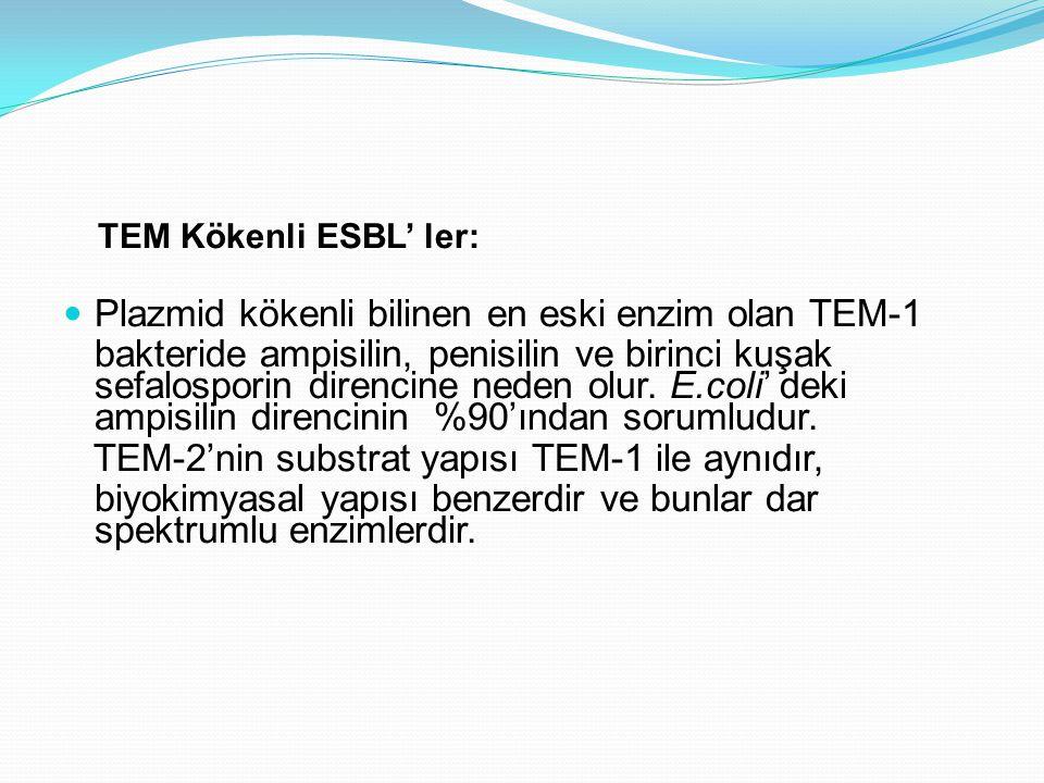 TEM Kökenli ESBL' ler: Plazmid kökenli bilinen en eski enzim olan TEM-1 bakteride ampisilin, penisilin ve birinci kuşak sefalosporin direncine neden o