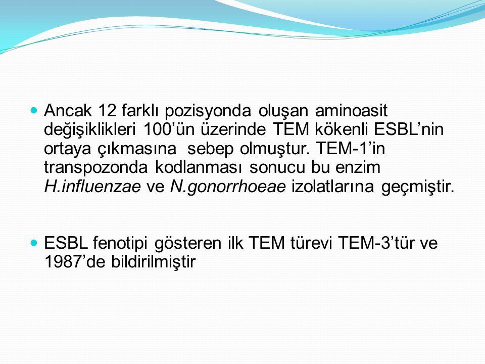 Ancak 12 farklı pozisyonda oluşan aminoasit değişiklikleri 100'ün üzerinde TEM kökenli ESBL'nin ortaya çıkmasına sebep olmuştur. TEM-1'in transpozonda