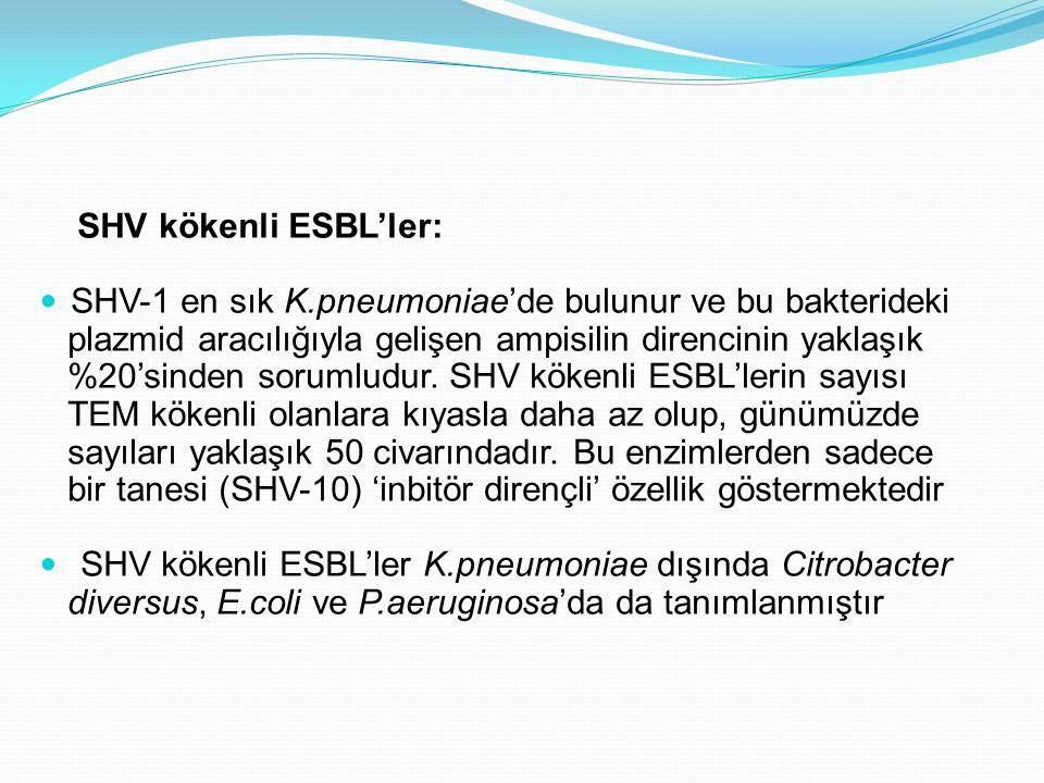 SHV kökenli ESBL'ler: SHV-1 en sık K.pneumoniae'de bulunur ve bu bakterideki plazmid aracılığıyla gelişen ampisilin direncinin yaklaşık %20'sinden sorumludur.