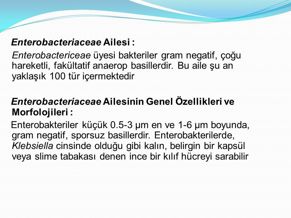 Enterobacteriaceae Ailesi : Enterobactericeae üyesi bakteriler gram negatif, çoğu hareketli, fakültatif anaerop basillerdir. Bu aile şu an yaklaşık 10
